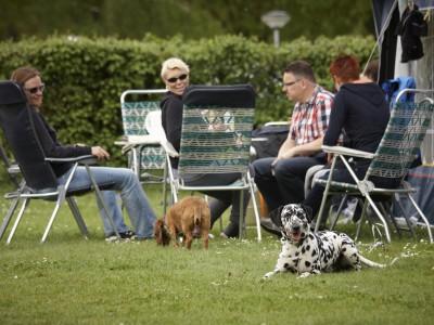 Campiere mit Hund